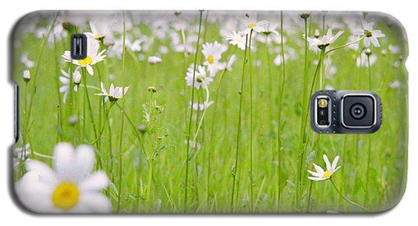 Brilliant Daisies Galaxy S5 Case