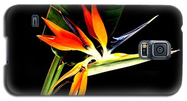 Galaxy S5 Case featuring the photograph Brilliant by Diane Merkle