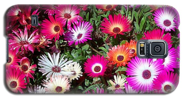 Galaxy S5 Case featuring the photograph Brilliant Flowers by Chalet Roome-Rigdon