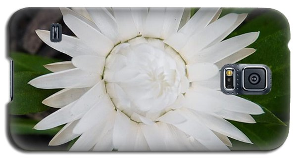 Galaxy S5 Case featuring the photograph Brilliant Strawflower by Jeanette Oberholtzer