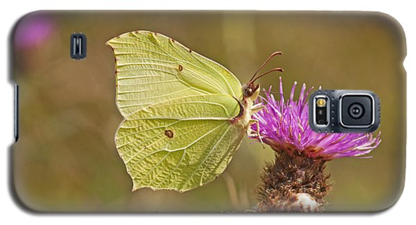Brimstone On Creeping Thistle Galaxy S5 Case by Paul Scoullar