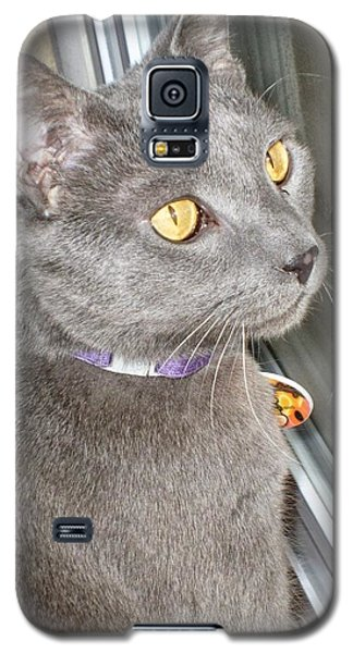 Galaxy S5 Case featuring the photograph Brique Watching The Snow Fall by Philomena Zito