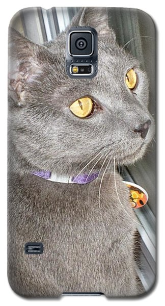 Brique Watching The Snow Fall Galaxy S5 Case by Philomena Zito