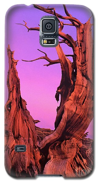 Galaxy S5 Case featuring the photograph Bristlecone Pine At Sunset White Mountains Californa by Dave Welling