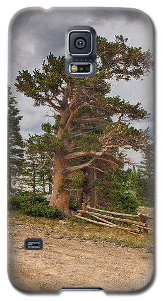 Bristlecone Pines Galaxy S5 Case