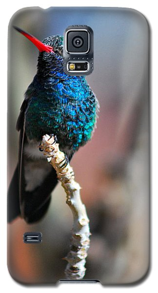 Galaxy S5 Case featuring the photograph Broad-billed Hummingbird by Barbara Manis