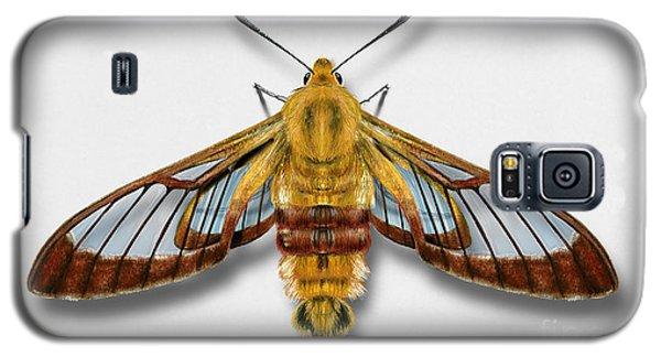 Broad-bordered Bee Hawk Moth Butterfly - Hemaris Fuciformis Naturalistic Painting -nettersheim Eifel Galaxy S5 Case