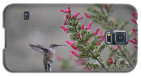 Broad Tail Hummingbird Galaxy S5 Case