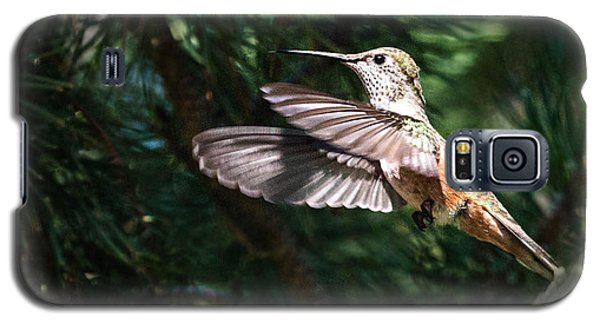 Broad-tailed Hummingbird Galaxy S5 Case