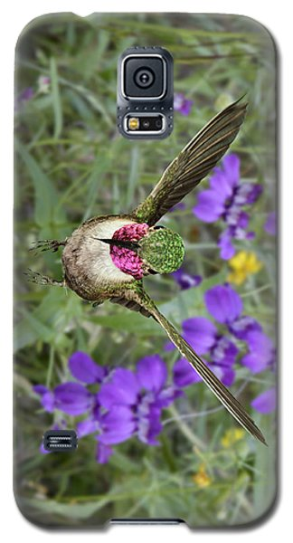 Broad-tailed Hummingbird - Phone Case Galaxy S5 Case