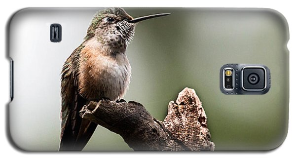 Broad-tailed Hummingbird Sit  Galaxy S5 Case