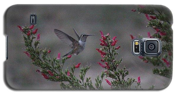 Broad Tailed Hummingbird Galaxy S5 Case