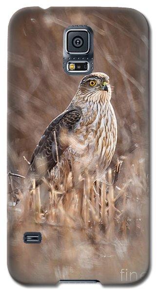 Broad-winged Hawk Galaxy S5 Case