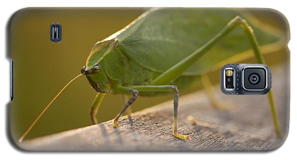 Broad-winged Katydid Galaxy S5 Case