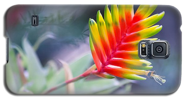 Bromeliad Beauty Galaxy S5 Case by Eti Reid
