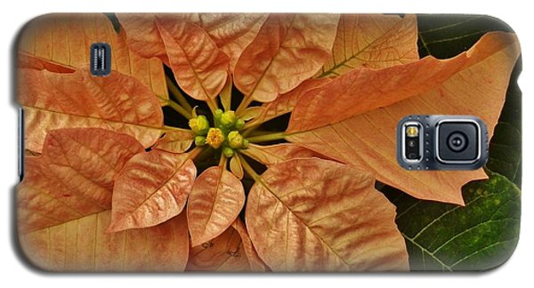 Bronze Poinsettia 3 Galaxy S5 Case by VLee Watson