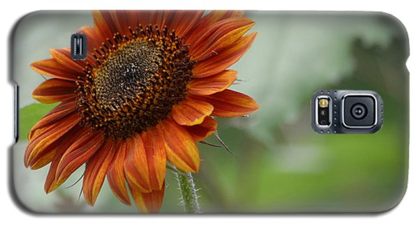 Bronze Sunflower Galaxy S5 Case by Living Color Photography Lorraine Lynch