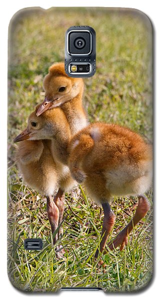 Galaxy S5 Case featuring the photograph Brotherly Love by Phil Stone