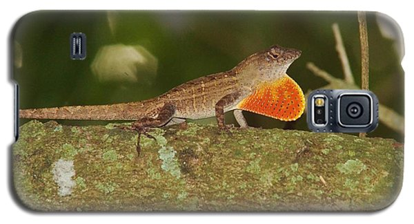 Brown Anole Splendor Galaxy S5 Case by Lynda Dawson-Youngclaus
