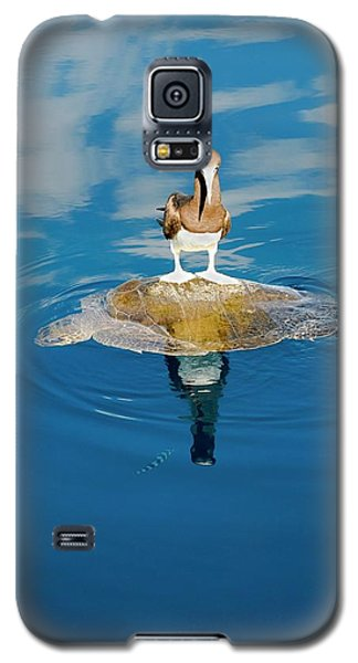 Brown Booby And Marine Turtle Galaxy S5 Case by Christopher Swann