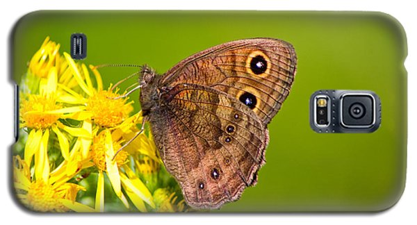 Galaxy S5 Case featuring the photograph Brown Butterfly by Adria Trail