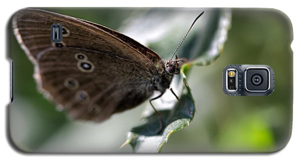 Galaxy S5 Case featuring the photograph Brown Butterfly On Leaf by Leif Sohlman