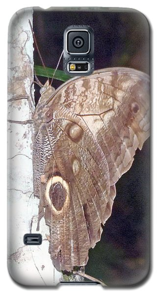 Brown Butterfly Galaxy S5 Case