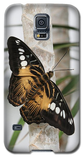Brown Clipper Butterfly #2 Galaxy S5 Case by Judy Whitton