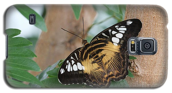 Galaxy S5 Case featuring the photograph Brown Clipper Butterfly #5 by Judy Whitton