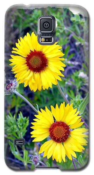 Brown- Eyed Susans Galaxy S5 Case