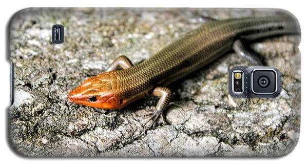 Brown Headed Skink Galaxy S5 Case