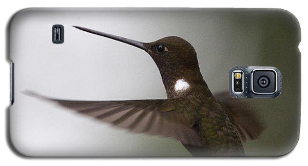 Brown Inca Hummingbird Galaxy S5 Case