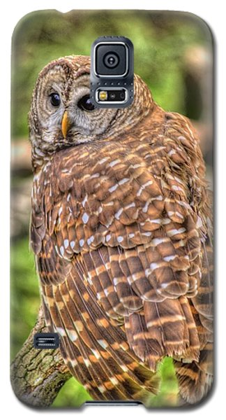 Brown Owl Galaxy S5 Case by Donald Williams