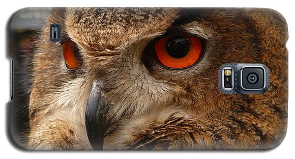 Brown Owl Galaxy S5 Case by Vicki Spindler