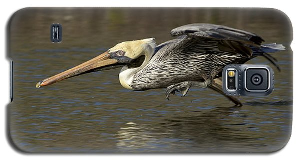 Galaxy S5 Case featuring the photograph Brown Pelican Fishing Photo by Meg Rousher