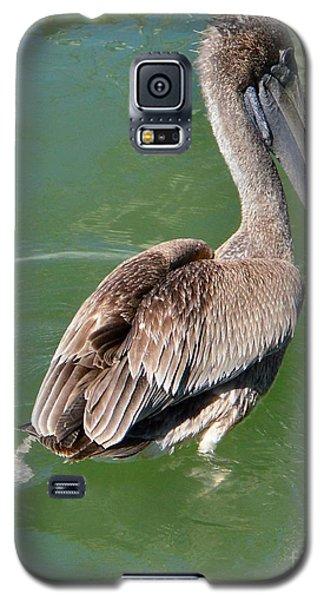 Brown Pelican II Galaxy S5 Case by Audrey Van Tassell