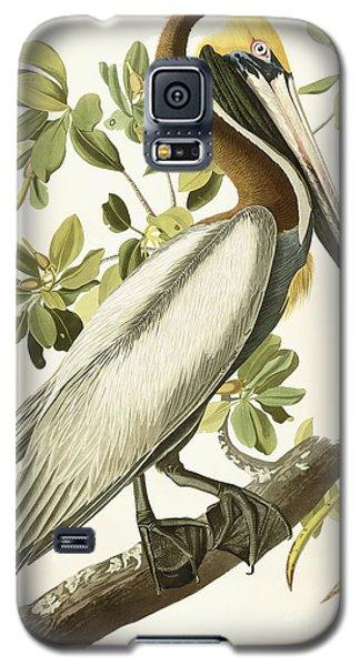 Audubon Galaxy S5 Case - Brown Pelican by John James Audubon