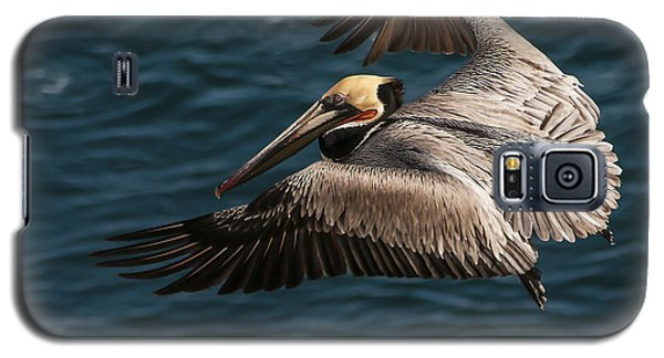Brown Pelican Landing Galaxy S5 Case