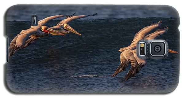 Galaxy S5 Case featuring the photograph Brown Pelican Pairs 73a2331 by David Orias