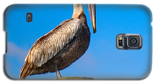 Galaxy S5 Case featuring the photograph Brown Pelican - Pelecanus Occidentalis by Carsten Reisinger
