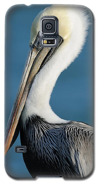 Galaxy S5 Case featuring the photograph Brown Pelican Portrait by Bradford Martin