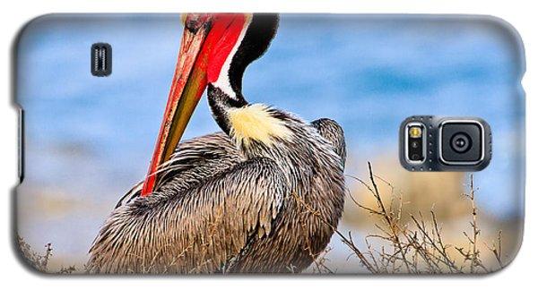 Brown Pelican Posing Galaxy S5 Case