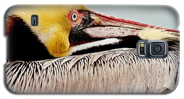 Brown Pelican Profile Galaxy S5 Case