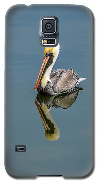 Galaxy S5 Case featuring the photograph Brown Pelican Reflection by Debra Martz