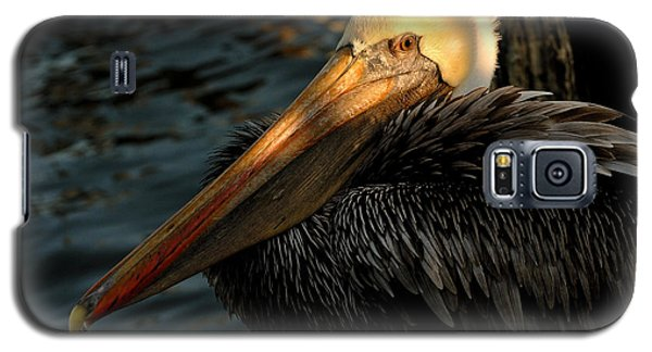 Brown Pelican Resting Galaxy S5 Case