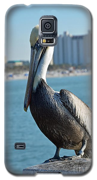 Galaxy S5 Case featuring the photograph Brown Pelican by Robert Meanor