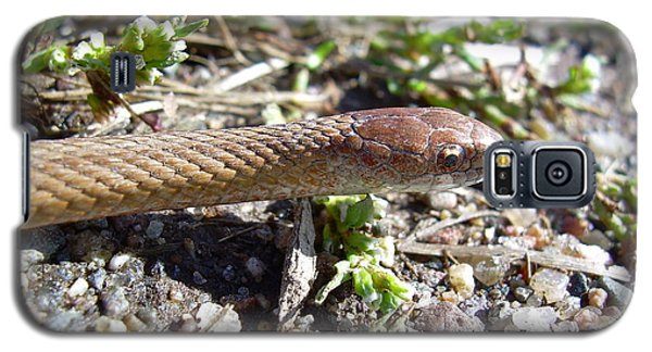 Brown Snake Galaxy S5 Case by Kent Lorentzen