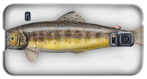 Brown Trout - Salmo Trutta Morpha Fario - Salmo Trutta Fario - Game Fish - Flyfishing Galaxy S5 Case