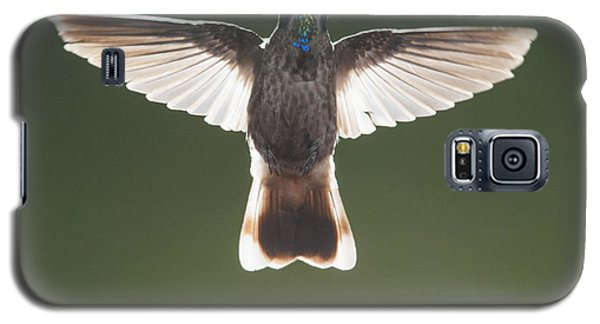 Galaxy S5 Case featuring the photograph Brown Violet-ear Hummingbird by Dan Suzio