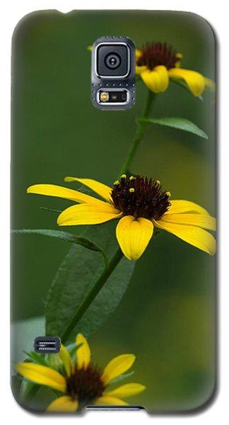 Browneyed Susan Galaxy S5 Case